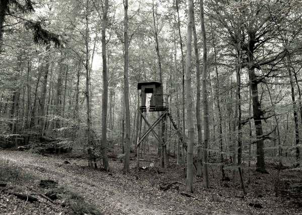 Restless Home - Wald II 2014